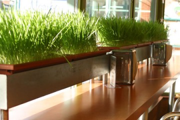 juicegrass