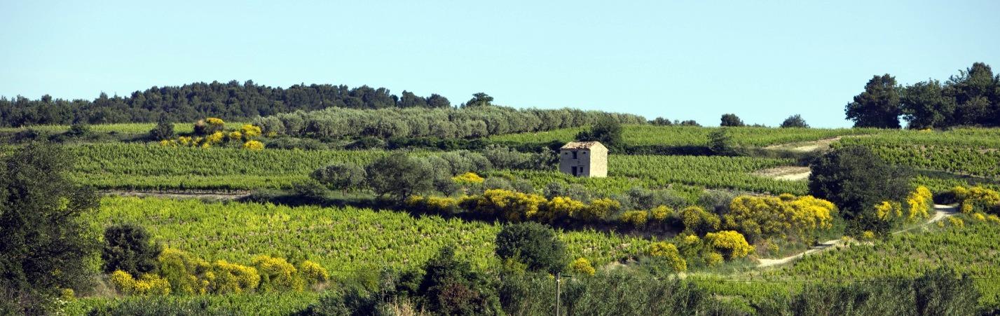 Côtes du Rhône Villages Saint-Maurice