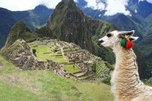 South America Machu Pichu with Alpaca