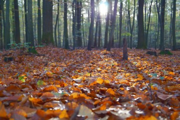 Fall in love with fall with fun family activities