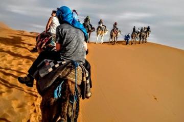 Morocco Camel Train Carter H.