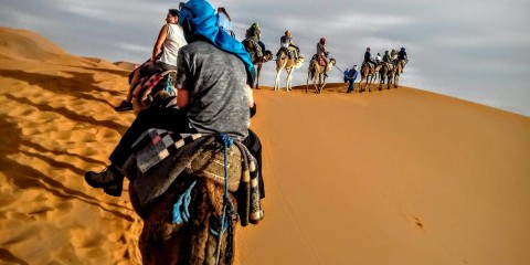 Morocco Camel Train Carter H.